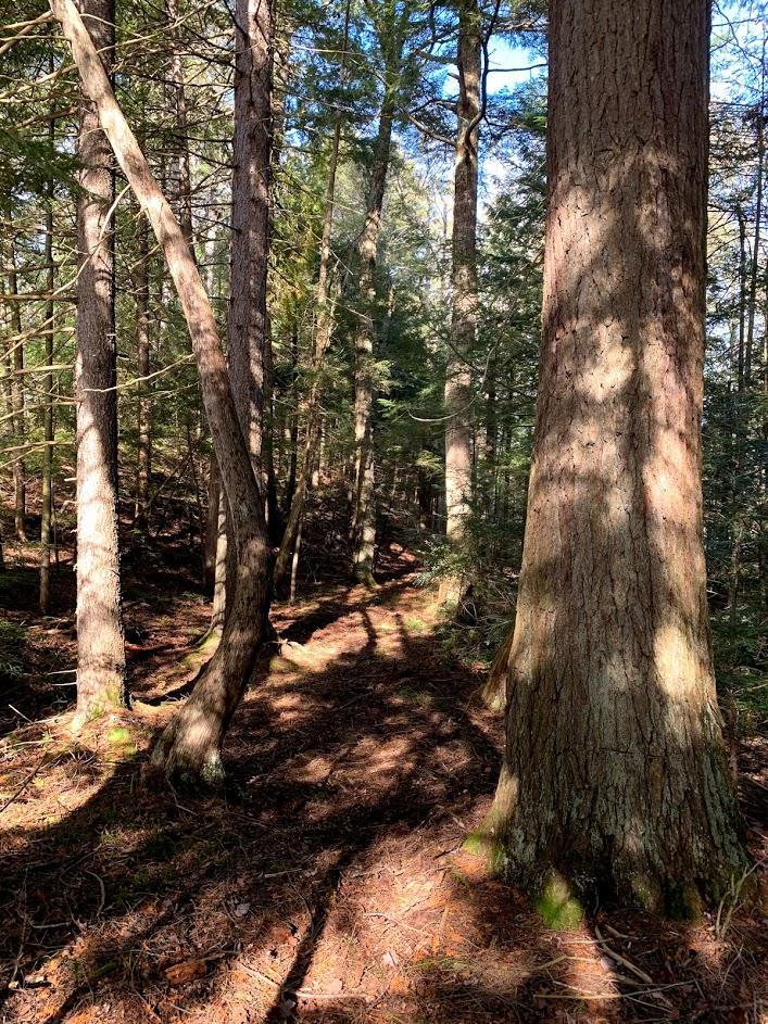 Gestes inappropriés dans la Forêt de la Seigneurie de Lotbinière