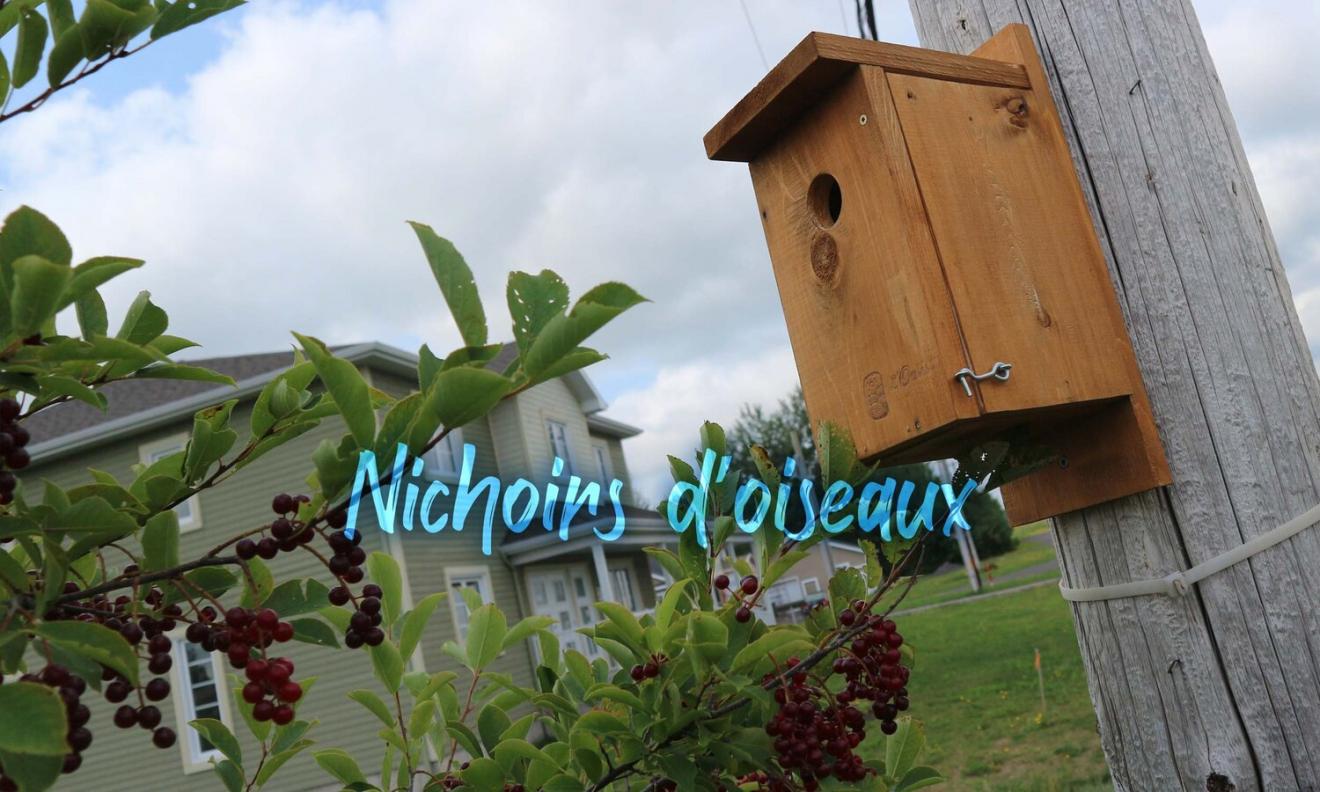 oasis-de-lotbiniere-nichoirs-d-oiseaux